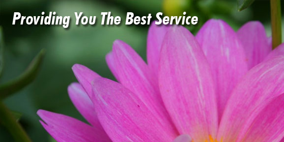 Providing You The Best Service